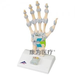 配置韧带与腕管结构的手骨胳威廉希尔