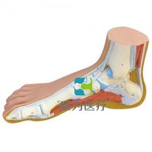 正常的足部