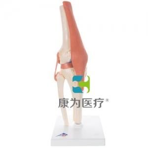 豪华型膝关节功能威廉希尔