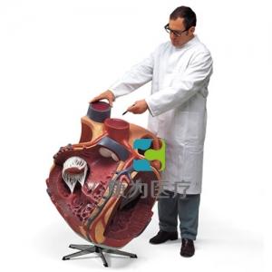 巨型心脏威廉希尔,实物的8倍