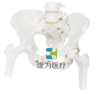 女性骨盆骨骼威廉希尔,带可拆卸股骨头