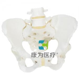 女性骨盆骨骼威廉希尔