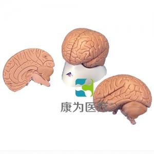 标准脑模型,2部分