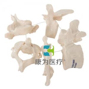 5块椎骨模型