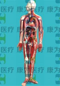 GPI血液循环系统硅胶betway必威手机版中文版(软硬结合)