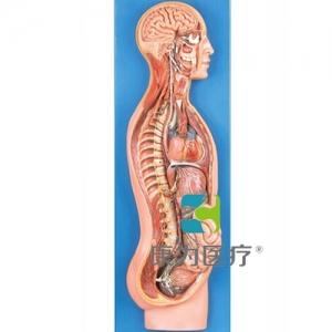 GPI神经系统硅胶ballbetapp下载(软硬结合)