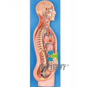 GPI神经系统硅胶betway必威手机版中文版(软硬结合)