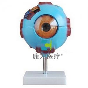GPI感觉器官眼睛眼球硅胶Manbo万博体育(软硬结合)