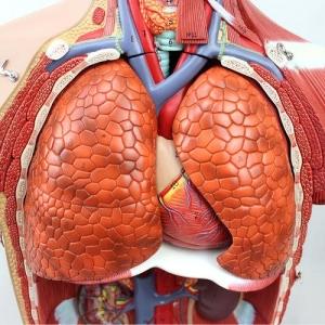 GPI内分泌系统硅胶威廉希尔(软硬结合)