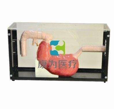 胃镜手术模拟器