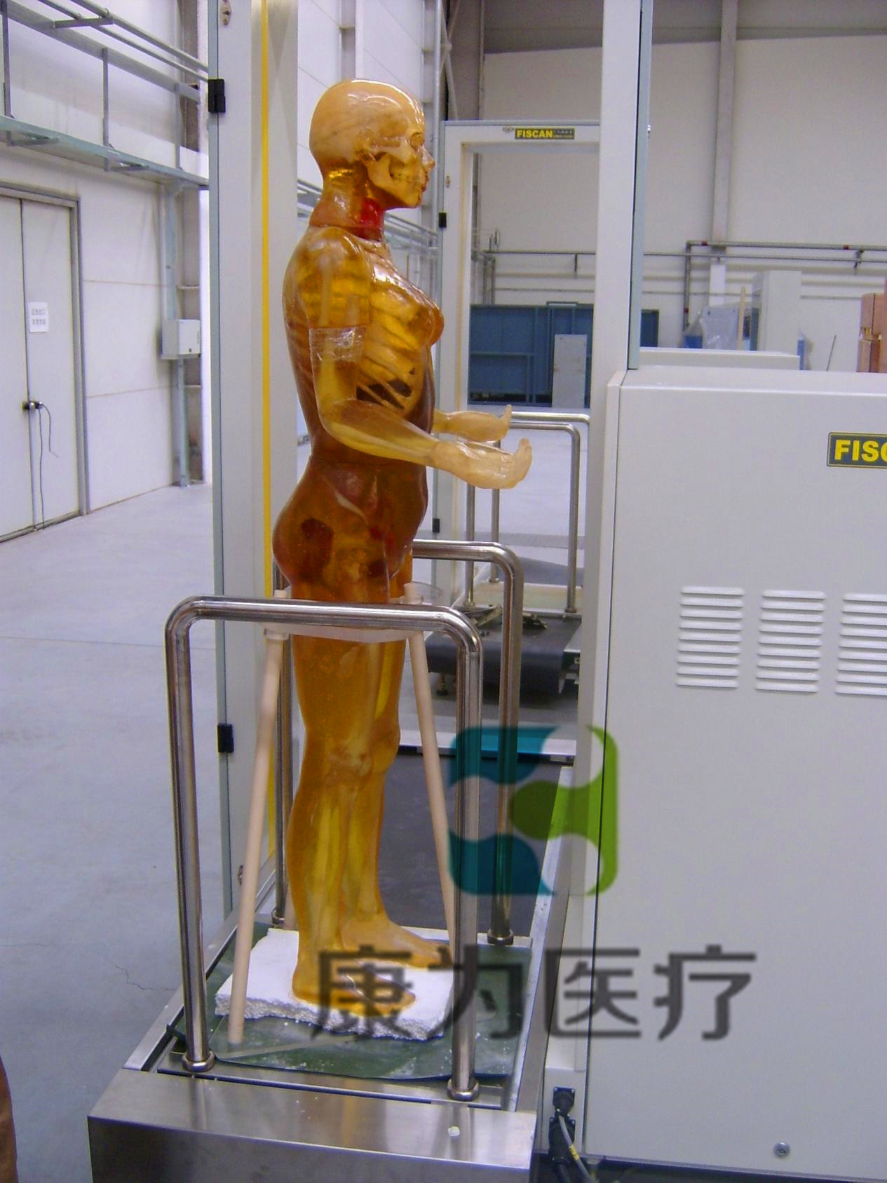 X线摄影定位用标准化模拟病人