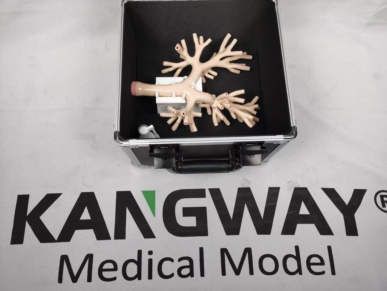 仿真支气管镜模拟训练器