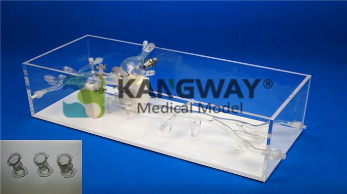 经导管主动脉瓣置换TAVR训练模型
